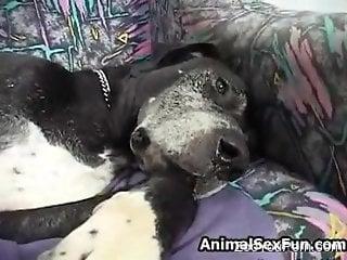 Brunette wife sucks big dog cock in extra sloppy modes