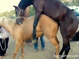 Brutal horse porn caught on cam by horny animal lover