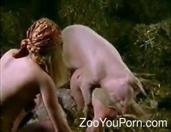 Pig Porn