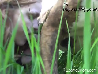 Skinny blonde sucks on a dog dick in the grass