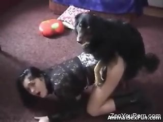 Brunette in black screaming during hard bestiality sex