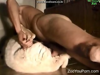 Horny guy fucking a sexy sheep in hat porno video