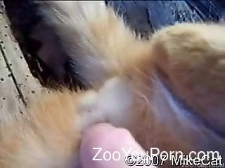 Cat Pussy Getting Finger Blasted While On Camera