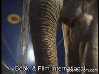 Blonde bitch tries to seduce an elephant in a hot vid
